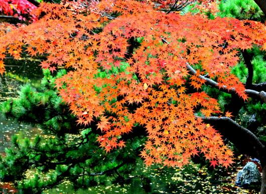 1-14.11.28 紅葉渓庭園-8.jpg