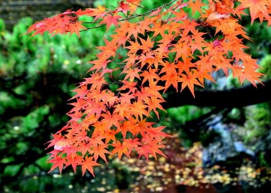 1-14.11.28 紅葉渓庭園-9.jpg