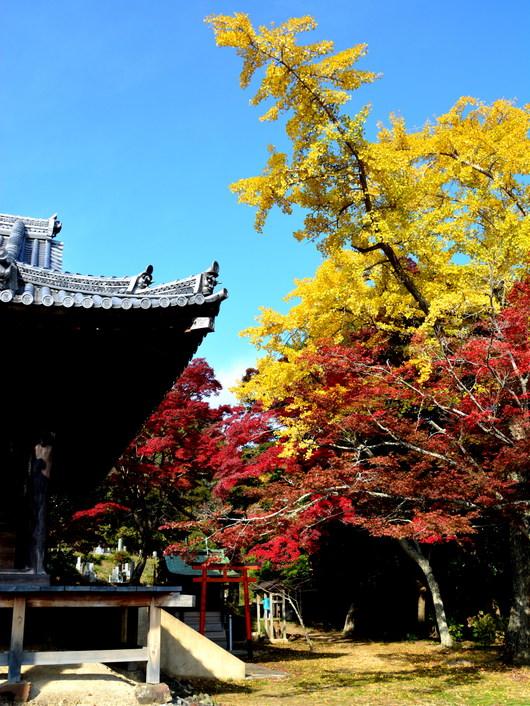 1-14.11.30 本恵寺の紅葉-1.jpg