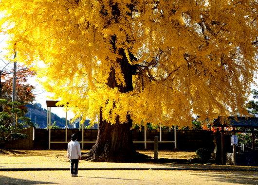 1-14.12.04 丹生酒殿神社-4.jpg