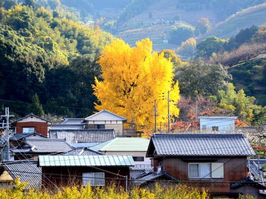1-14.12.04 丹生酒殿神社-7.jpg