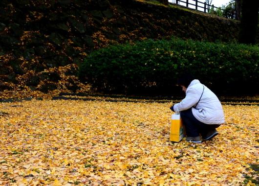 1-14.12.18 和歌山城公園-6.jpg