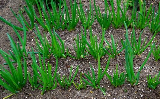 1-15.02.03 菜園-4.jpg