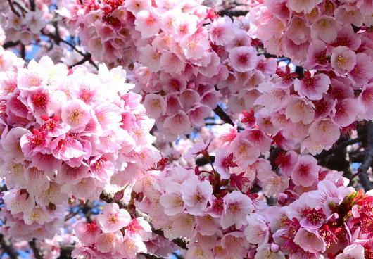 1-15.03.02 嘉ヶ作の桜-5.jpg