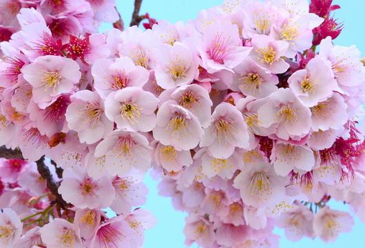 1-15.03.02 嘉ヶ作の桜-7.jpg