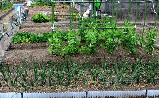1-15.03.06 菜園-1.jpg