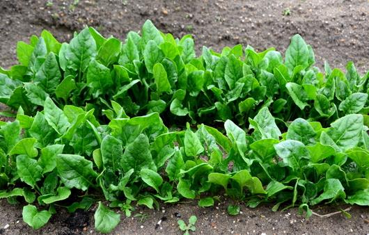 1-15.03.06 菜園-3.jpg