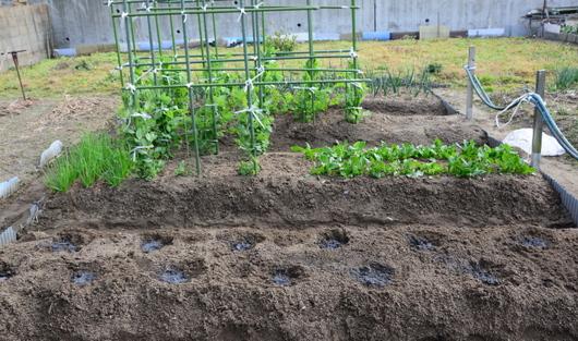 1-15.03.06 菜園-6.jpg