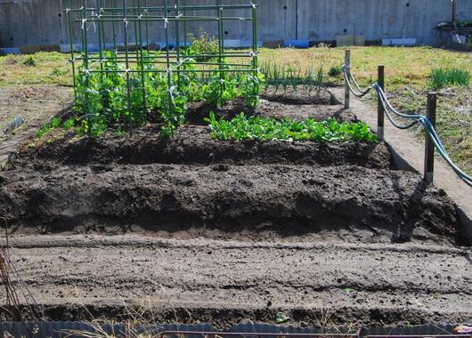 1-15.03.06 菜園-8.jpg