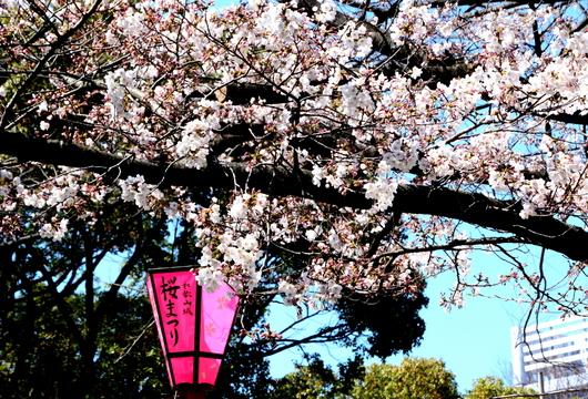 1-15.03.29 城内桜-1.jpg