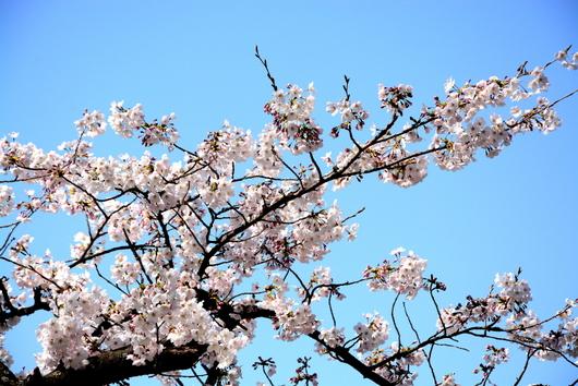 1-15.04.01 和歌山城公園-2.jpg