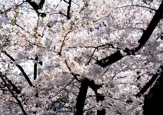 1-15.04.01 和歌山城公園-3.jpg