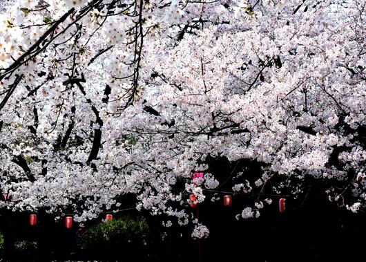 1-15.04.01 和歌山城公園-5.jpg