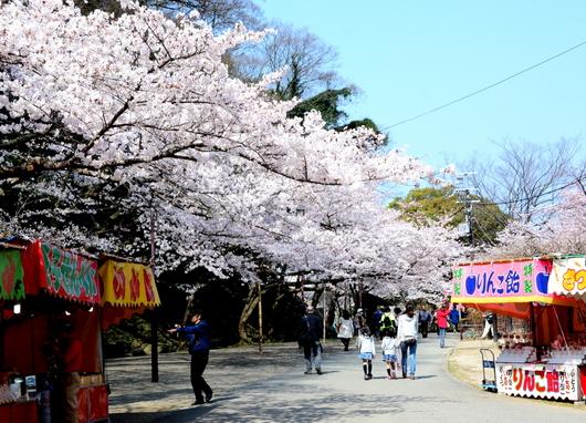 1-15.04.01 和歌山城公園-7.jpg