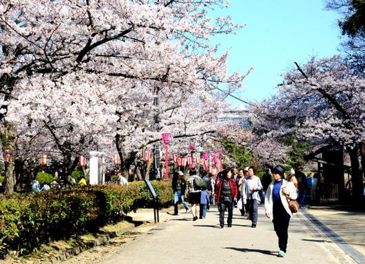 1-15.04.01 和歌山城公園-8.jpg
