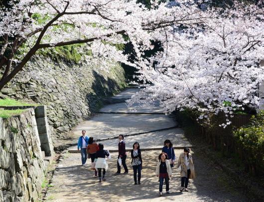 1-15.04.01 和歌山城公園-9.jpg