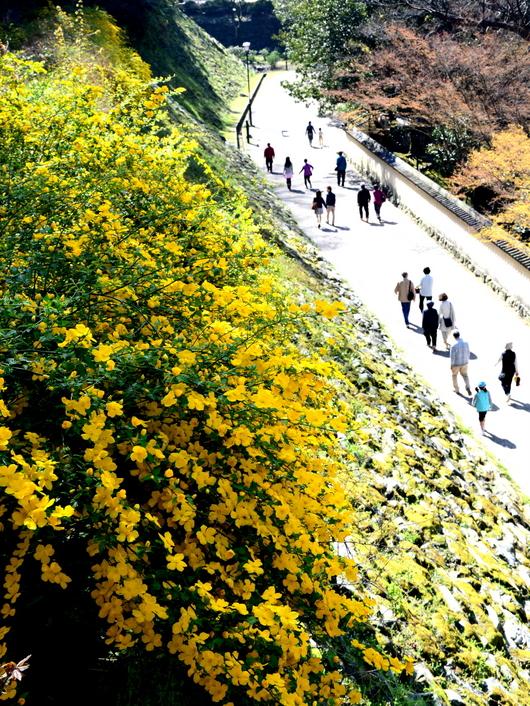 1-15.04.04 山吹の花-3.jpg