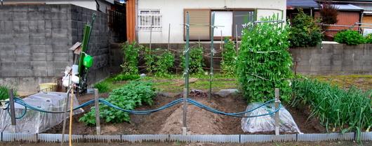 1-15.04.23 菜園.jpg