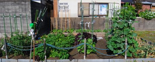 1-15.05.27 菜園-1.jpg
