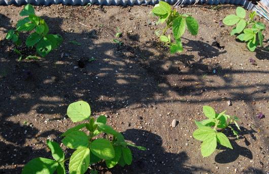 1-15.05.27 菜園-5.jpg