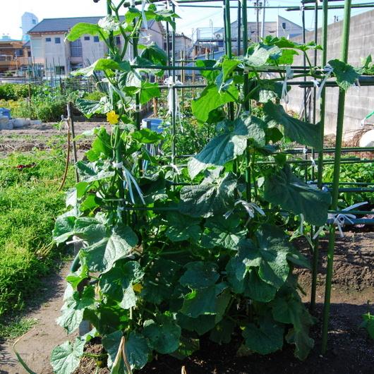 1-15.05.27 菜園-9.jpg