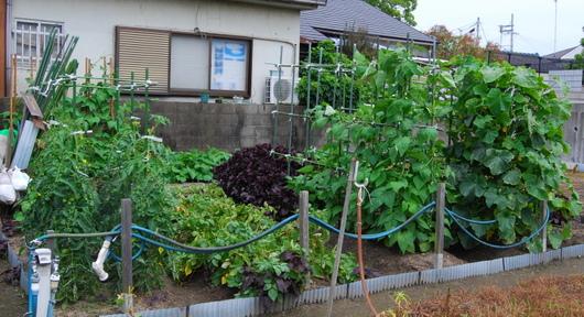 1-15.06.13 菜園全景.jpg