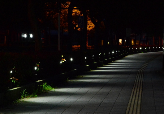 1-15.07.04 早朝散歩-1.jpg