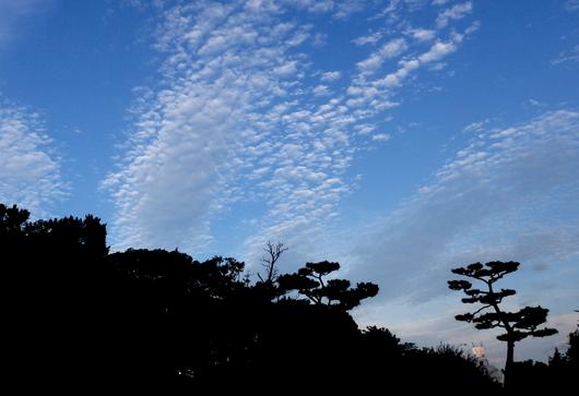 1-15.07.04 早朝散歩-8.jpg