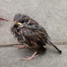 1-15.07.09 野鳥の雛.jpg