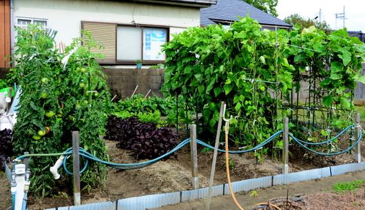 1-15.07.15 菜園-1.jpg