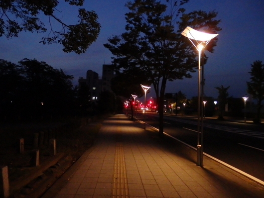 1-15.08.19 早朝散歩-1.jpg
