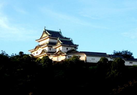 1-15.08.19 早朝散歩-10.jpg