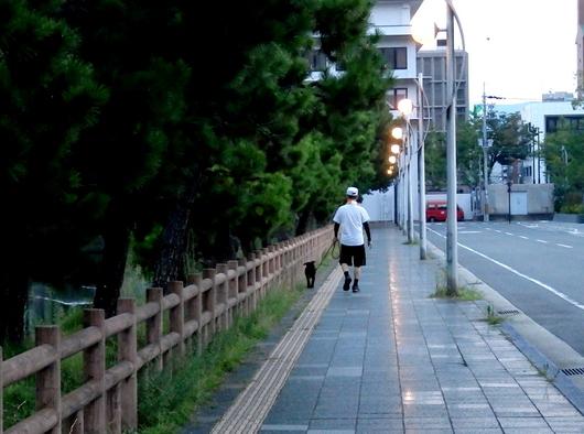 1-15.08.19 早朝散歩-6.jpg