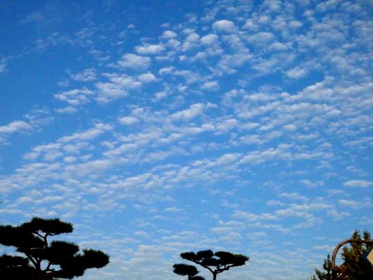 1-15.09.13 秋の雲-11.jpg