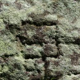 1-15.09.19 石垣の刻印-5.jpg