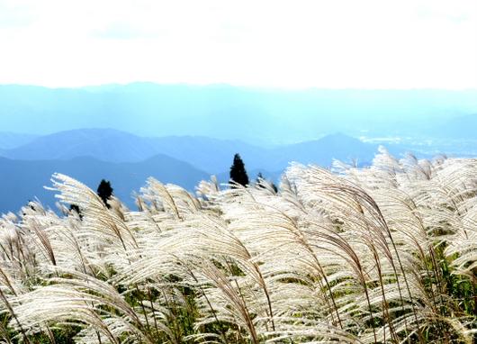 1-15.10.13 生石山のススキ-5.jpg