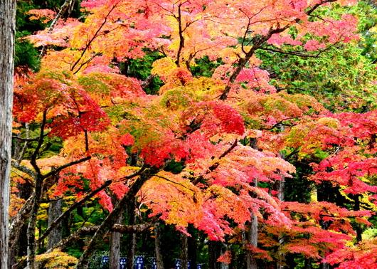 1-15.11.03 高野山の紅葉-4.jpg