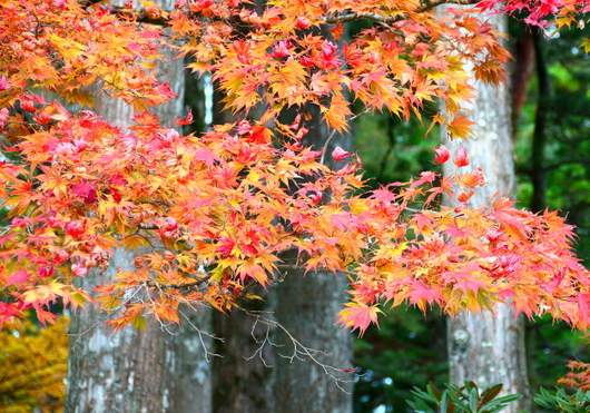 1-15.11.03 高野山の紅葉-5.jpg