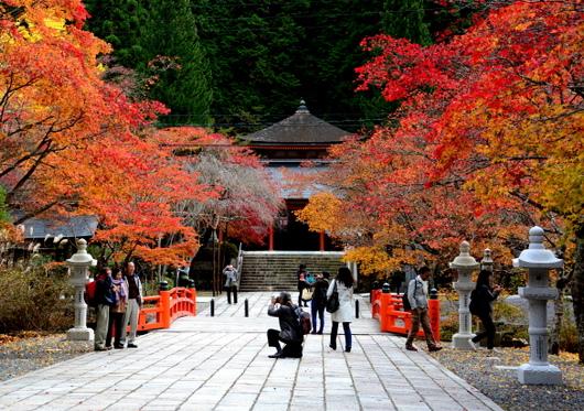 1-15.11.03 高野山の紅葉-9.jpg