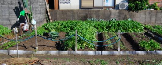 1-15.11.14 菜園-1.jpg