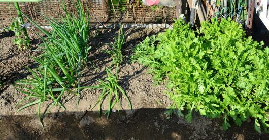 1-15.12.04 菜園-4.jpg