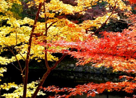 1-15.12.06 和歌山(城)公園紅葉-1.jpg