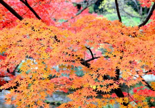 1-15.12.06 和歌山(城)公園紅葉-7.jpg