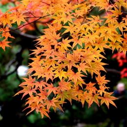 1-15.12.06 和歌山(城)公園紅葉-8.jpg
