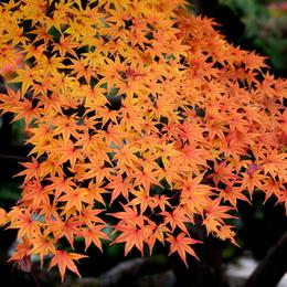 1-15.12.06 和歌山(城)公園紅葉-9.jpg