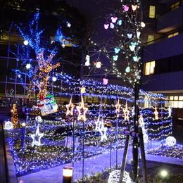 1-15.12.15 日赤イルミネーション-4.jpg