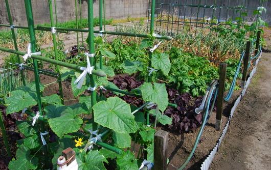 1-16.05.26 家庭菜園-1.jpg