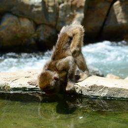 1-16.07.15 野猿公苑-4.jpg