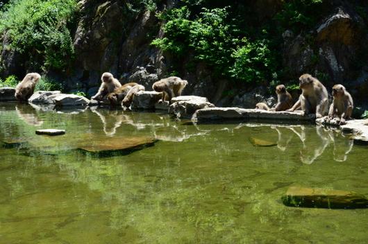1-16.07.15 野猿公苑-7.jpg