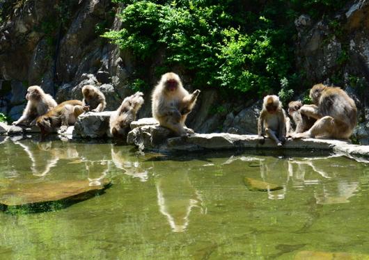 1-16.07.15 野猿公苑-8.jpg
